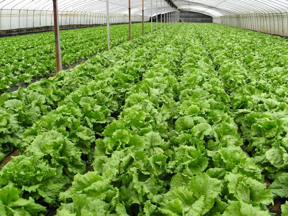 Advantage of Organic Farming